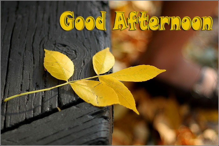 good afternoon status in hindi language